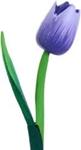 Picture of Houten tulp 39 cm Paars