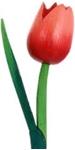 Afbeeldingen van Houten tulp 39 cm donker Rood